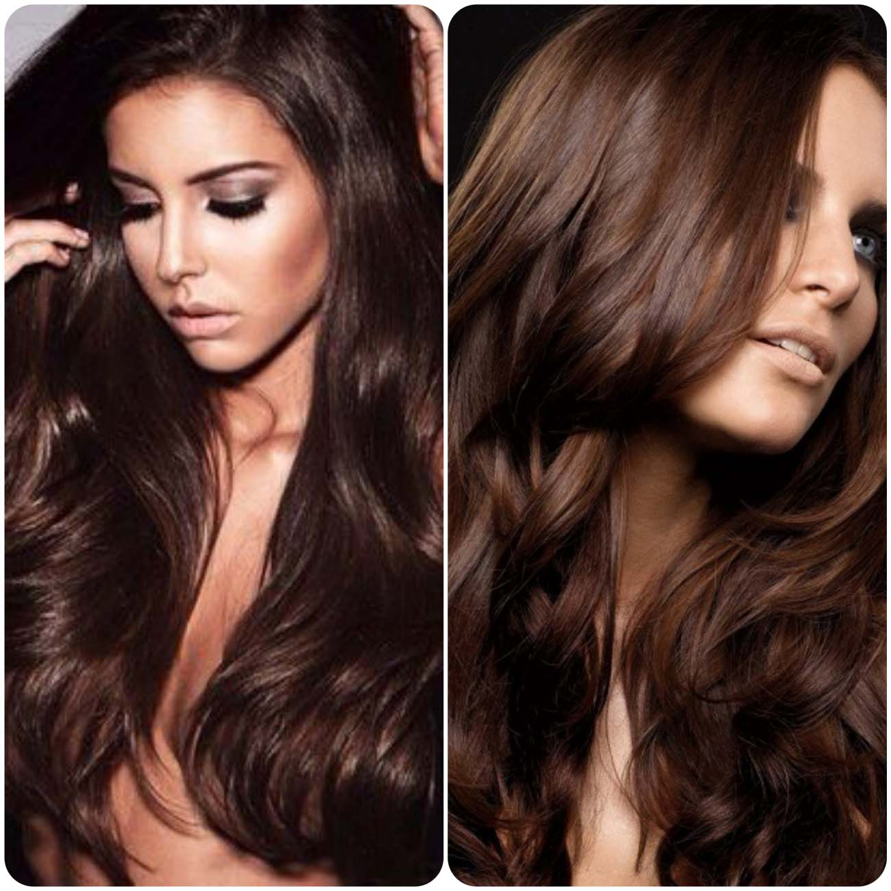 Bestchocolatebrownhaircolors New Medium Hairstyles Of
