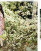 Orient Textiles Latest SpringSummer Lawn kurtis Collection 2016-2017…styloplanet (64)